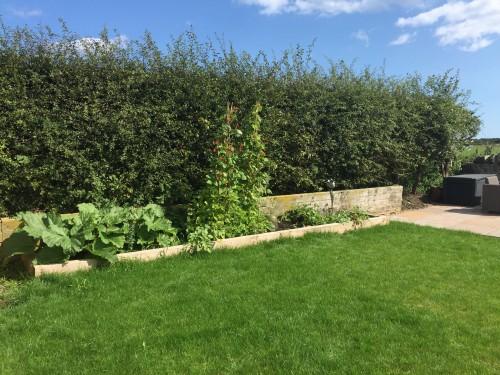 Growing vegetables!